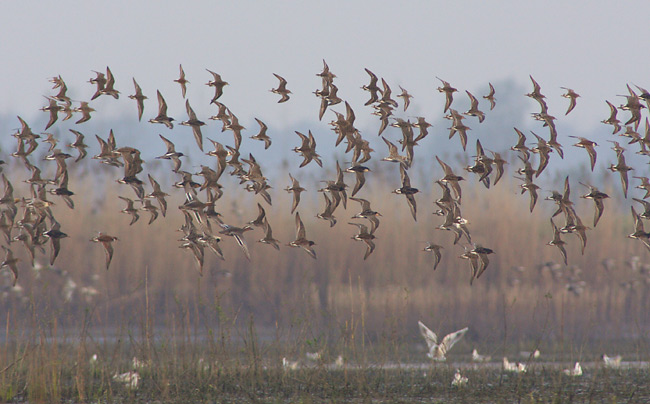 ptaki wedrowne 1