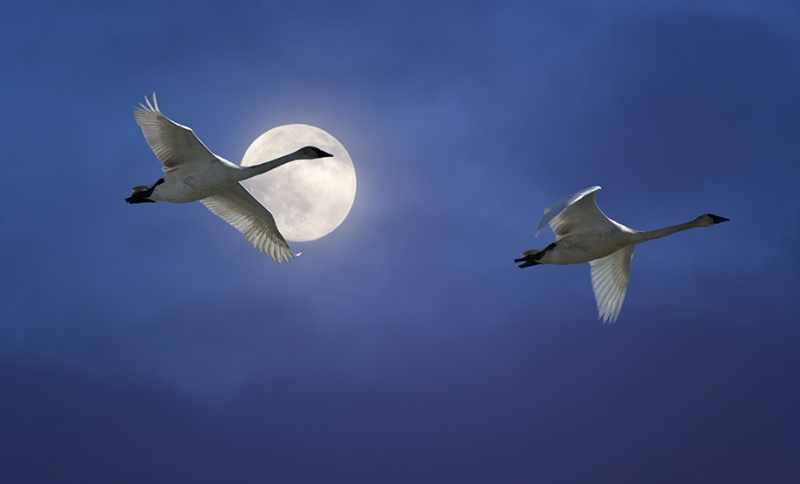 ptaki wedrowne 2