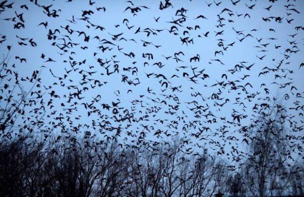 ptaki wedrowne Polska