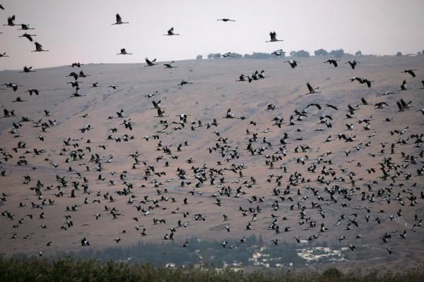 ptaki wedrowne