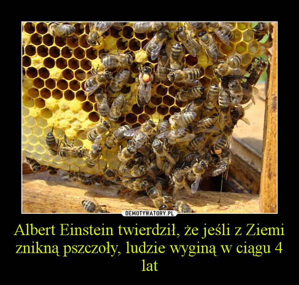pszczoly gina