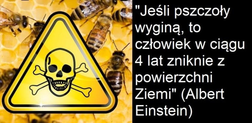 Pszczoły giną masowo, taże w Polsce. Jak temuzapobiegać?